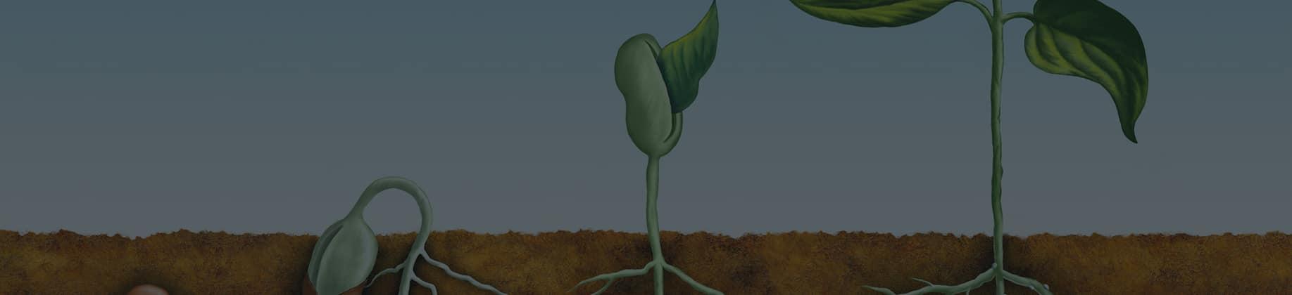 Fizjologia roślin (4L)