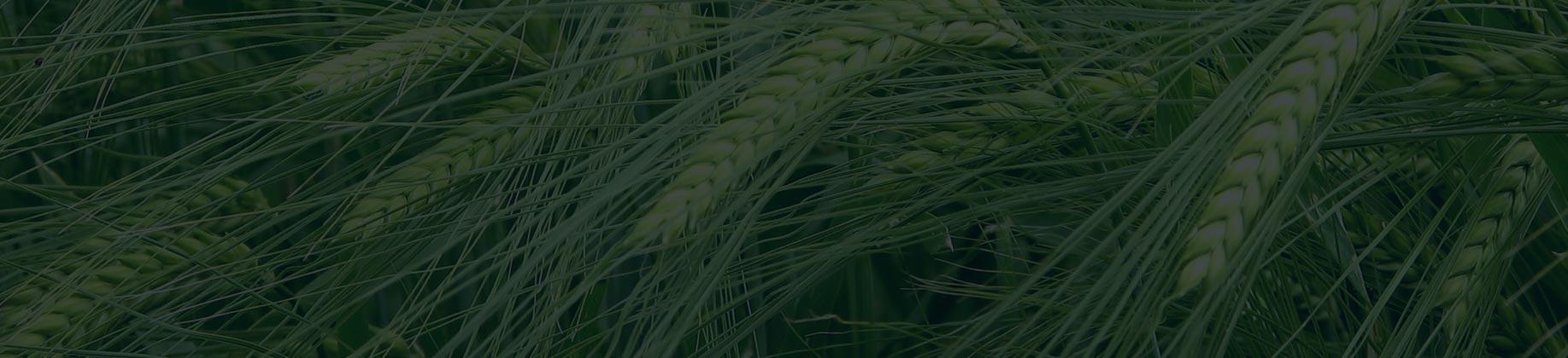Rośliny (4L)