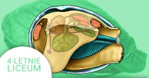 Okładka kursu z Biologii do 4-letniego liceum Bezkręgowce