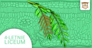 Okładka kursu z Biologii do 4-letniego liceum Rośliny