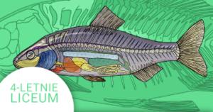 Okładka kursu z Biologii do 4-letniego liceum Strunowce