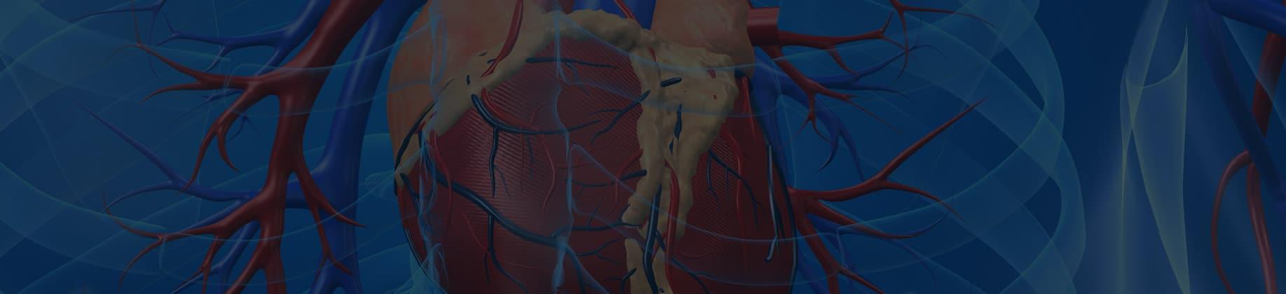 Człowiek – układ krążenia i odporność (3L)