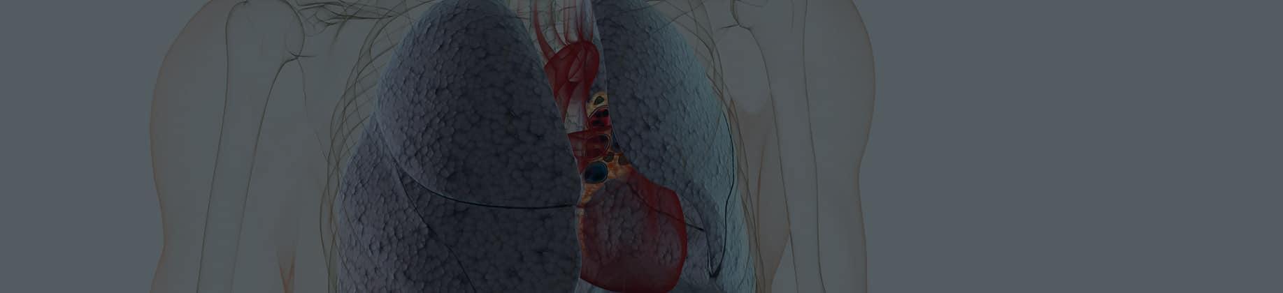 Człowiek – układ oddechowy (3L)