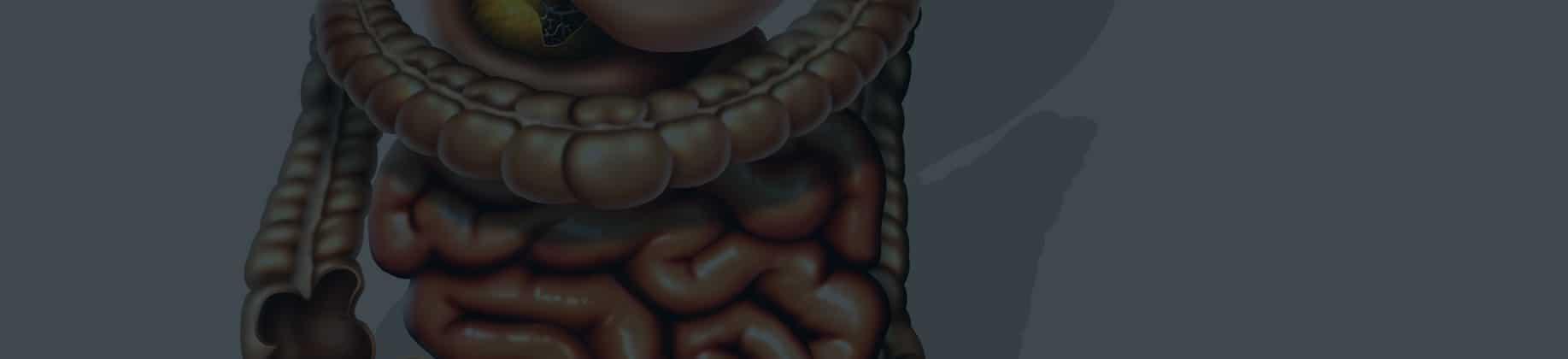 Człowiek – układ pokarmowy (3L)