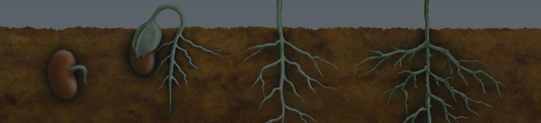 Fizjologia roślin (3L)
