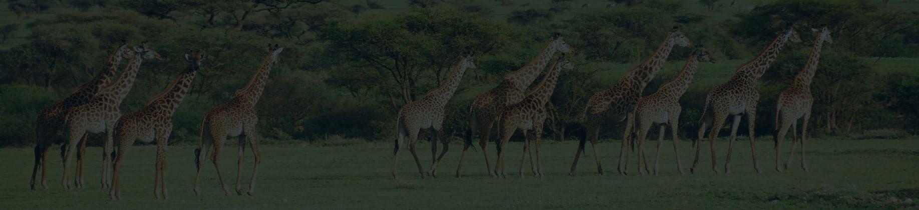 Ochrona bioróżnorodności (3L)