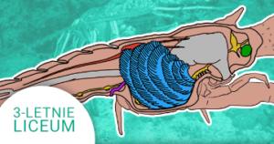 Okładka kursu z Biologii Do 3-letniego liceum Bezkręgowce