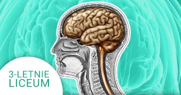 Okładka kursu z Biologii do 3-letniego liceum Człowiek - układ nerwowy i narządy zmysłów