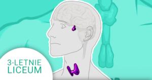 Okładka kursu z Biologii do 3-letniego liceum Człowiek - układ hormonalny
