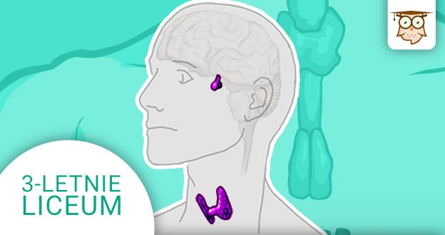 Okładka kursu z Biologii do 3-letniego liceum Człowiek - regulacja hormonalna