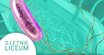 Okładka kursu z Biologii Do 3-letniego liceum Prokarionty