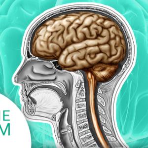 Okładka produktu. Kurs Człowiek - układ nerwowy i narządów zmysłów