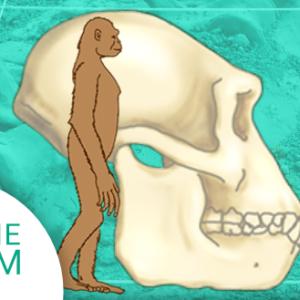 Okładka produktu. Kurs Ewolucjonizm