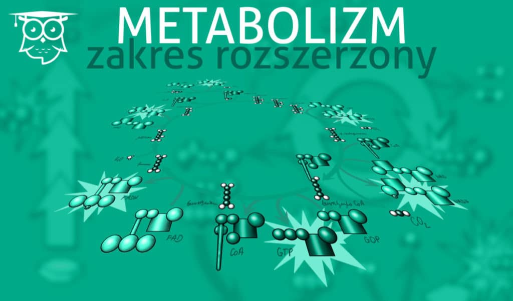 Grafika wyróżniająca do wpisu Biologia klasa 1. Metabolizm