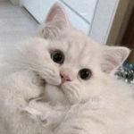 Zdjęcie profilowe Adrianna Tondera