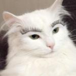 Zdjęcie profilowe miauk